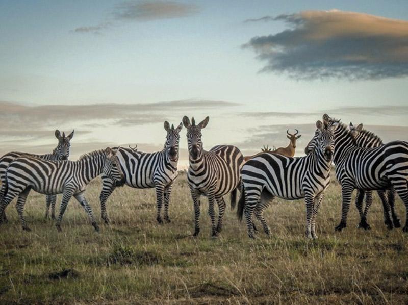Getty Images прекращает прием изображений диких животных, снятых за пределами их среды обитания