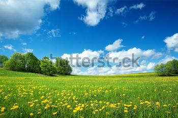 Поле с желтыми одуванчиками и голубым небом