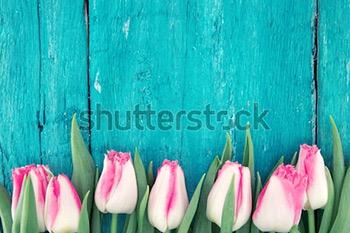 Рамка из тюльпанов на бирюзовом фоне деревенский деревянный. Весенние цветы. Весенний фон. Открытка на день Святого Валентина, женский день и день матери. Вид сверху.