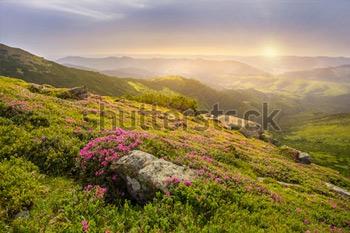 Весенний пейзаж в горах с цветком рододендрона и утренним солнцем.