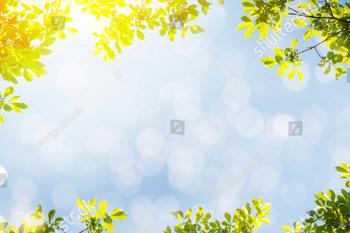 Весенний фон с зелеными листьями.