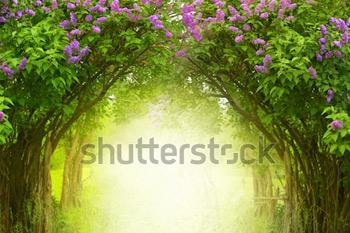 Фэнтезийный фон. Волшебный лес. Красивый весенний пейзаж. Цветут лиловые деревья