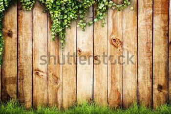 Свежая весенняя зеленая трава и листья растения на фоне деревянного забора