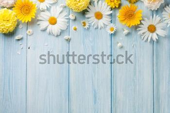 Садовые цветы на синем фоне. Деревянный стол. Фон с пространством под текст.