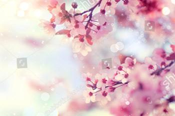 Граница весны или искусство предпосылки с розовым цветением. Красивая природа сцена с цветущих деревьев и солнечной вспышки. Пасха Солнечный день. Весенние цветы. Красивый фруктовый сад абстрактный размытый фон. Весна