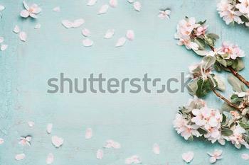 Предпосылка природы весны с симпатичным цветением в голубом пастельном цвете, взгляд сверху, знамени. Концепция весны