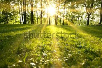 Солнечный свет в зеленом лесу, весеннее время