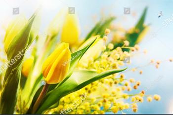 Тюльпаны. Весна. 8 марта. Пасха.